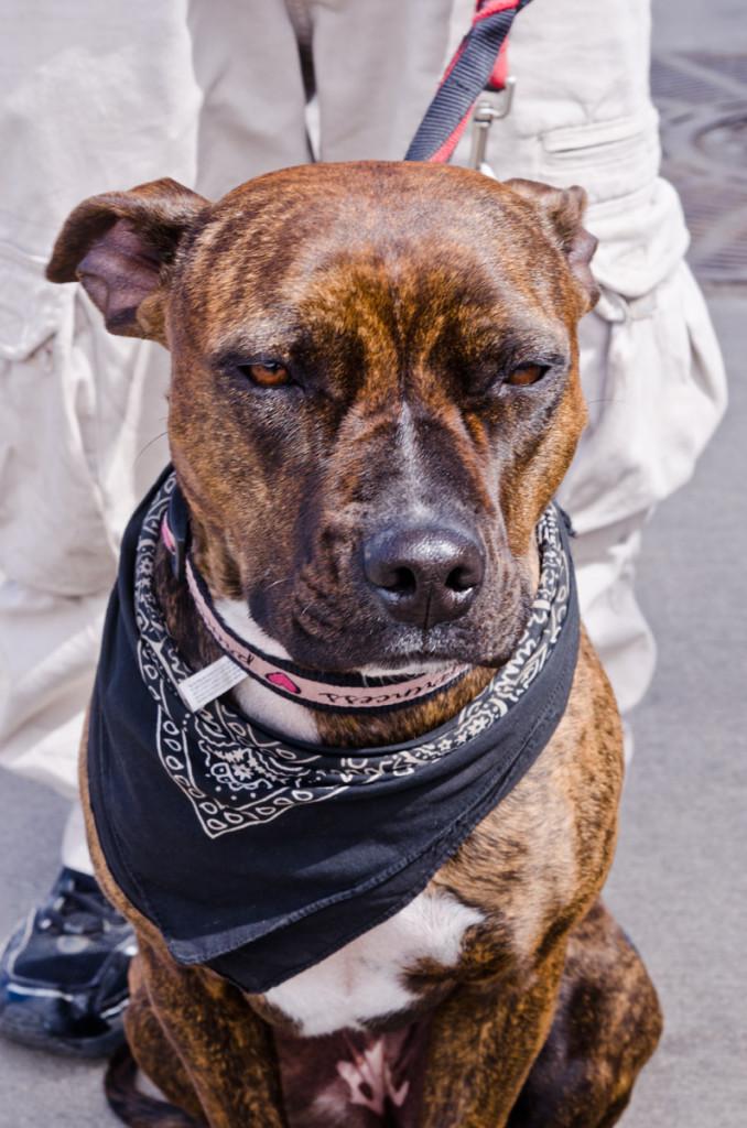 dog_colorado-DSC2211
