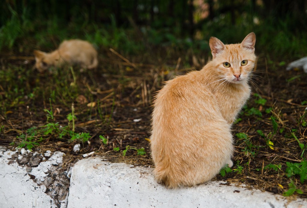 cats-russians-DSC_6703