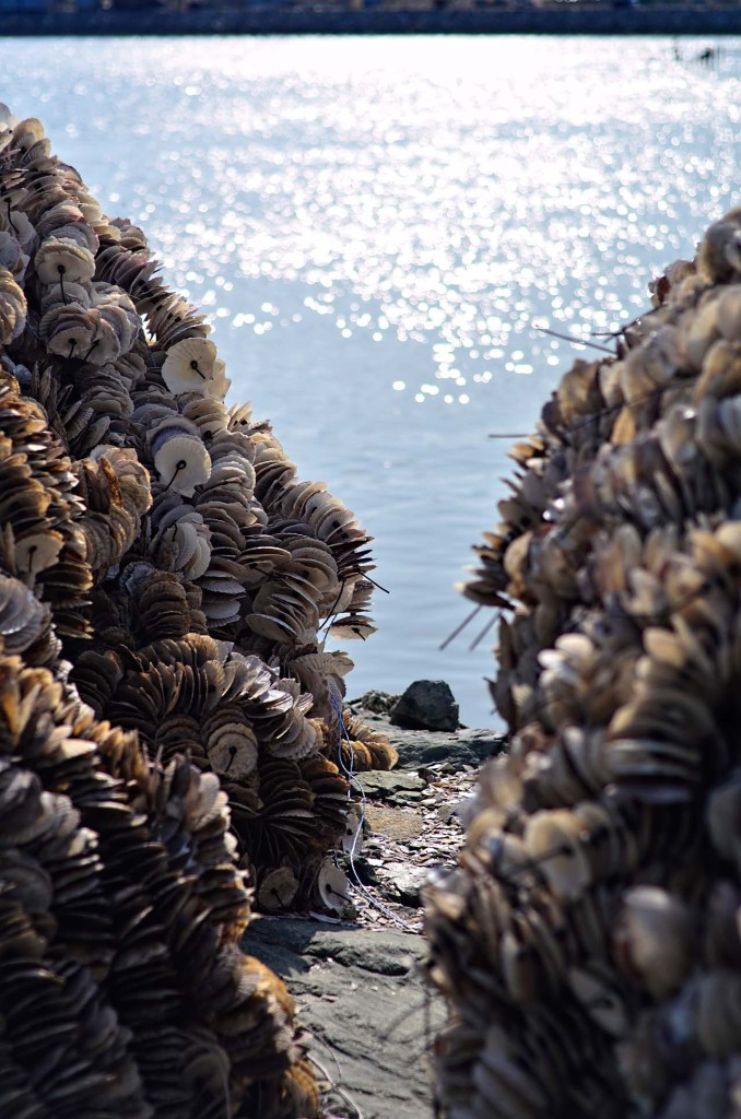 DSC_0678-seashells