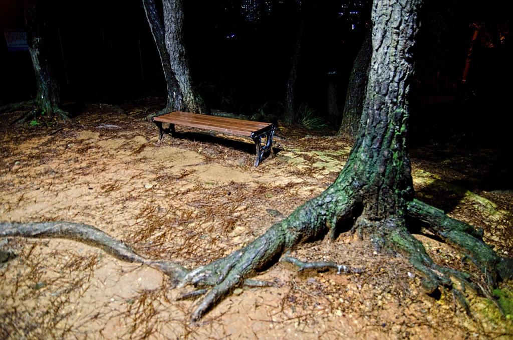 baesan-roots-DSC_7790