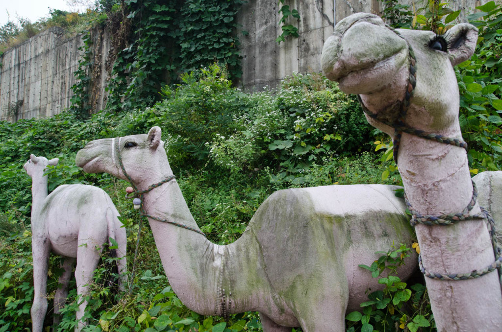 camels_han-river_DSC_8851