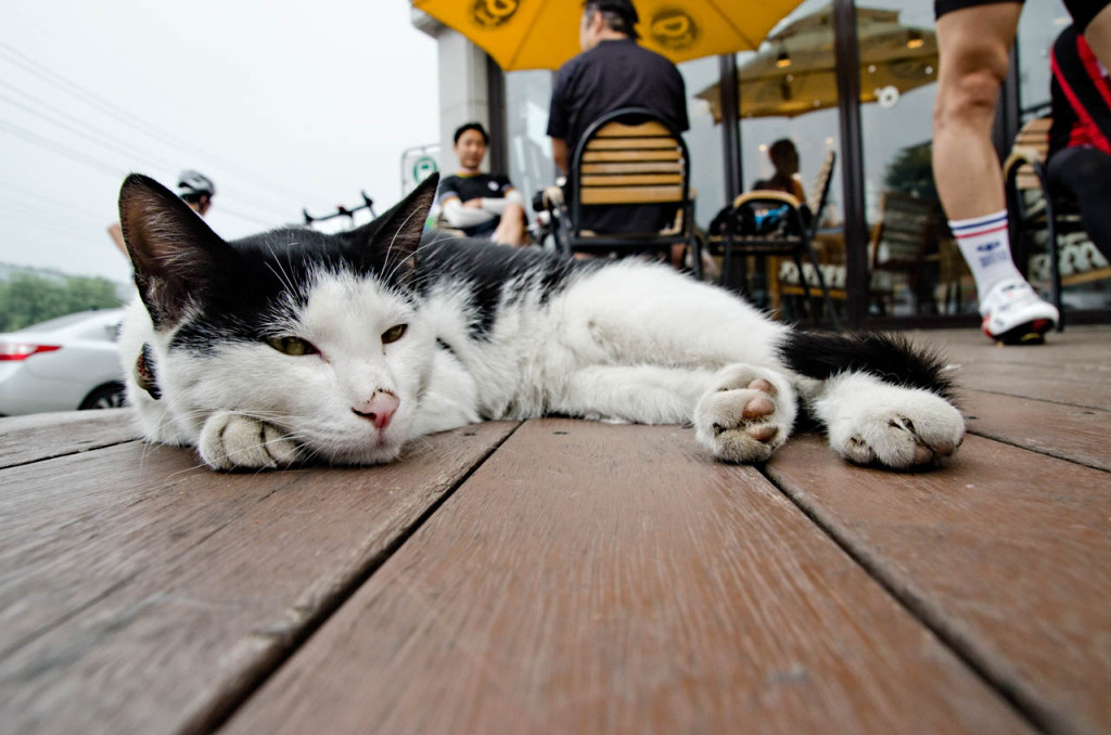 cat-at-cafe_hanriver_DSC_8813