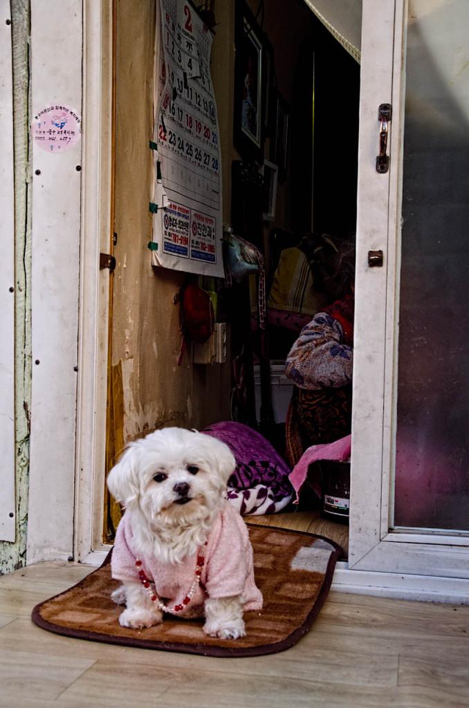 dog-nampo-DSC_0722