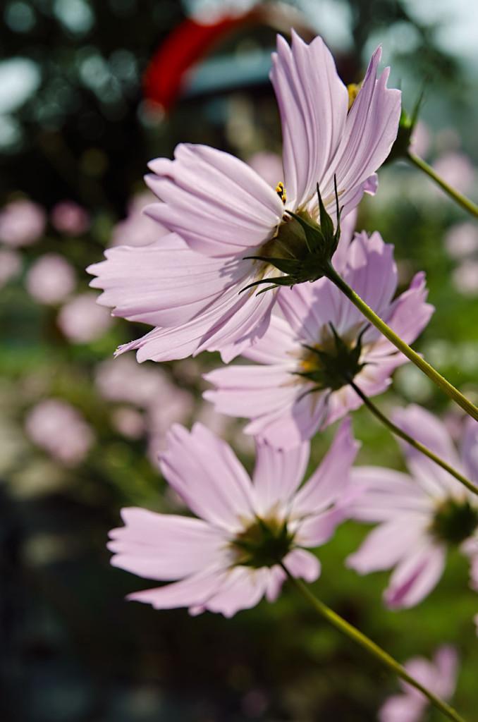flowers-DSC_9019