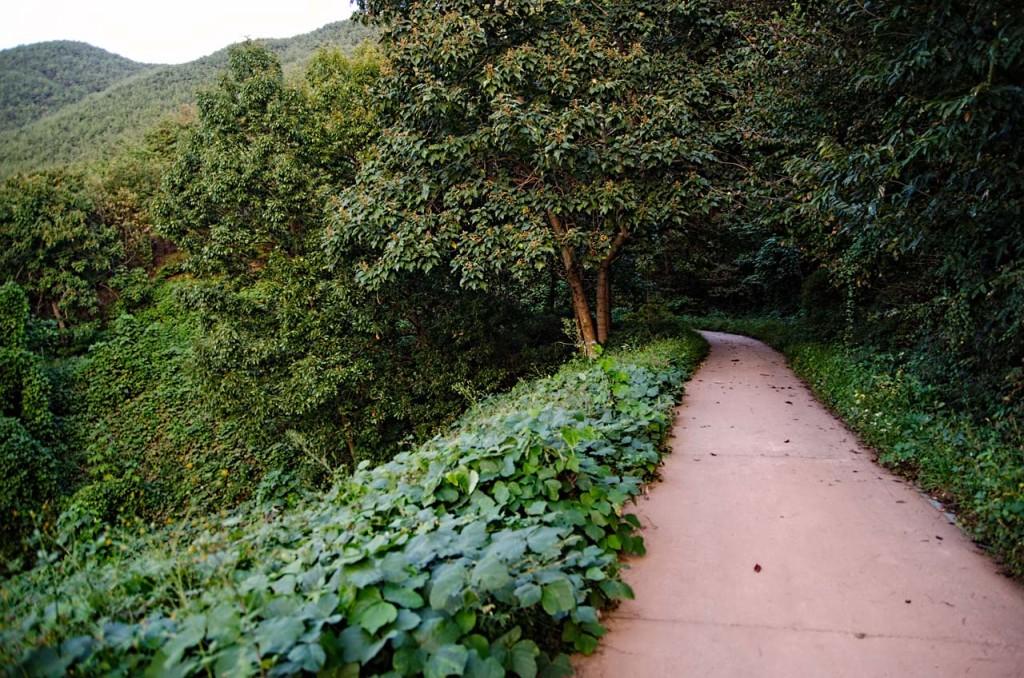 path-DSC_9403