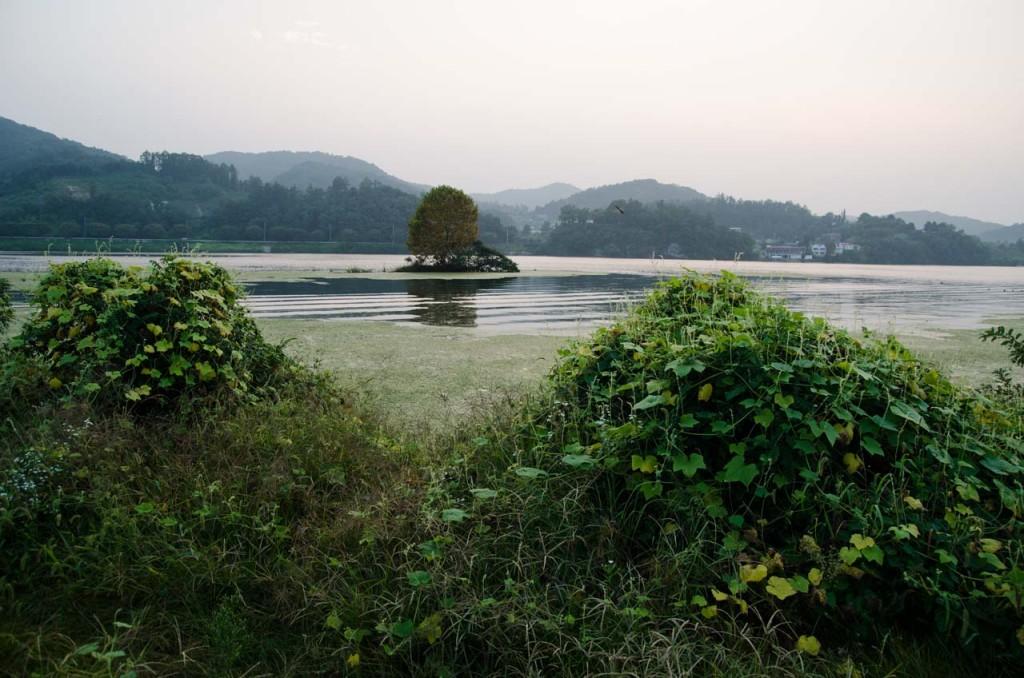river-tree-island-DSC_8938