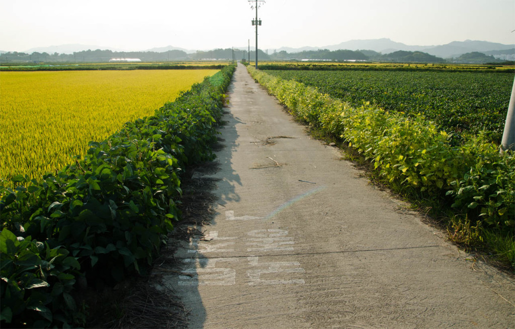 road-rice-DSC_9181