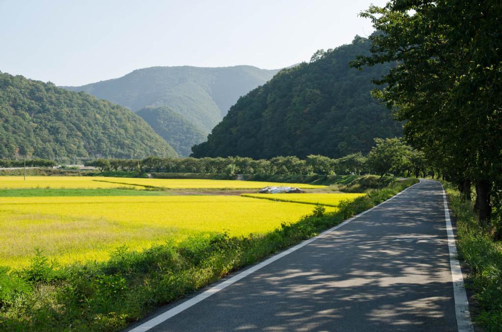 road-rice-road-DSC_9083