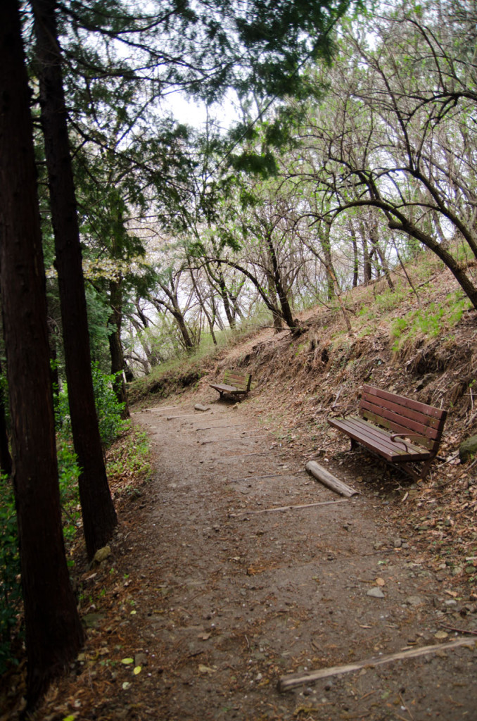 benches-DSC_2183