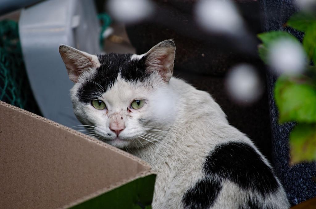cat-ulsan-DSC_1049