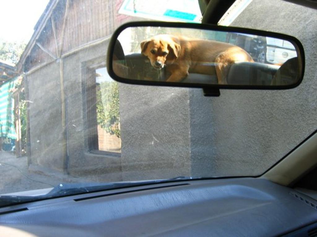 dog-ema-los-andes
