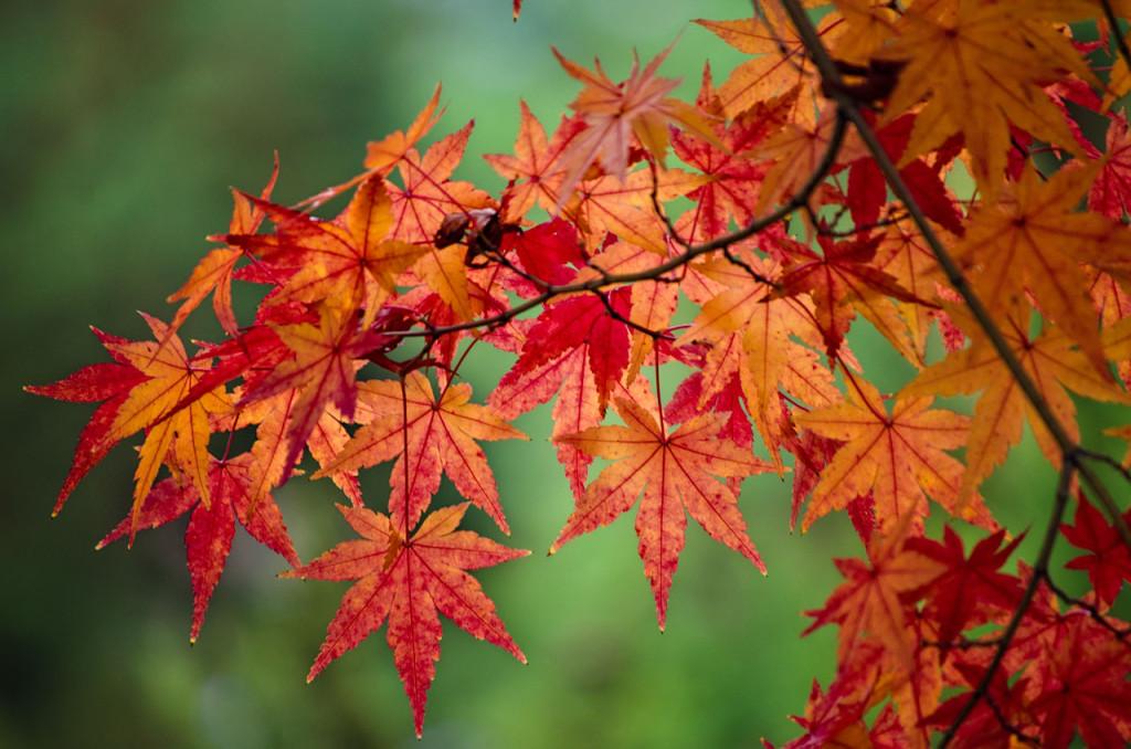 leaves-DSC_0965