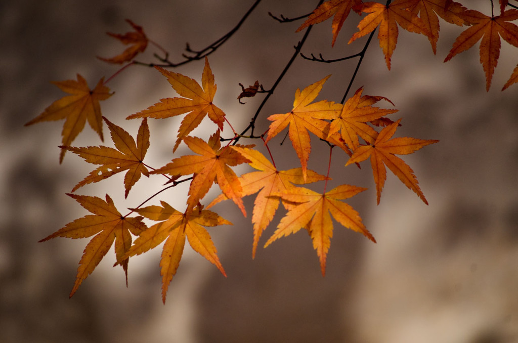 leaves-fall-DSC_1008