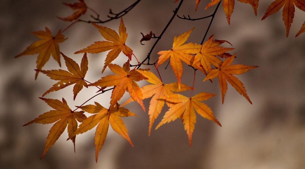 leaves-fall-DSC_1008