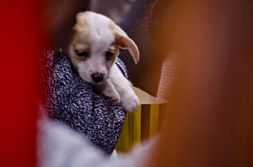 puppy-DSC_1055