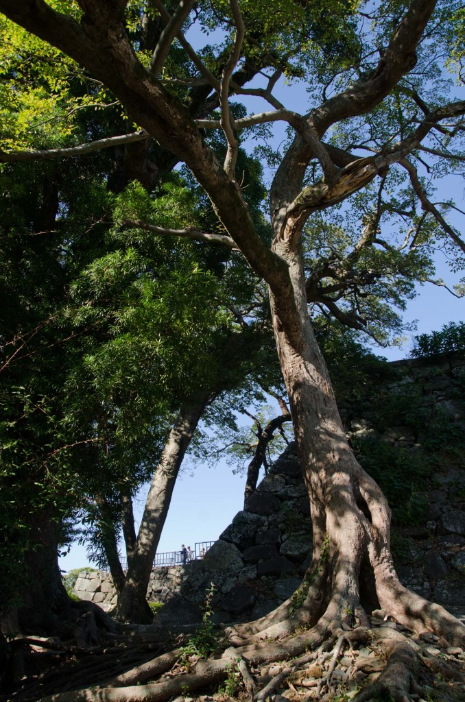 Maizuru_Park-DSC_5821