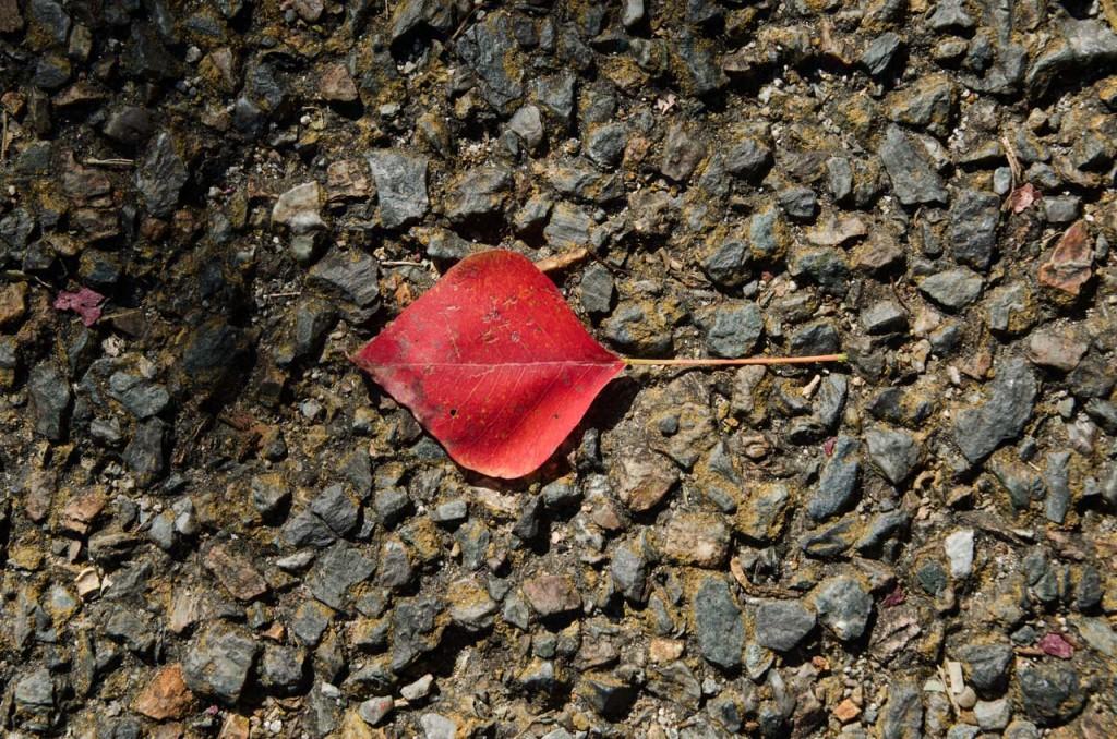 leaf-DSC_5788