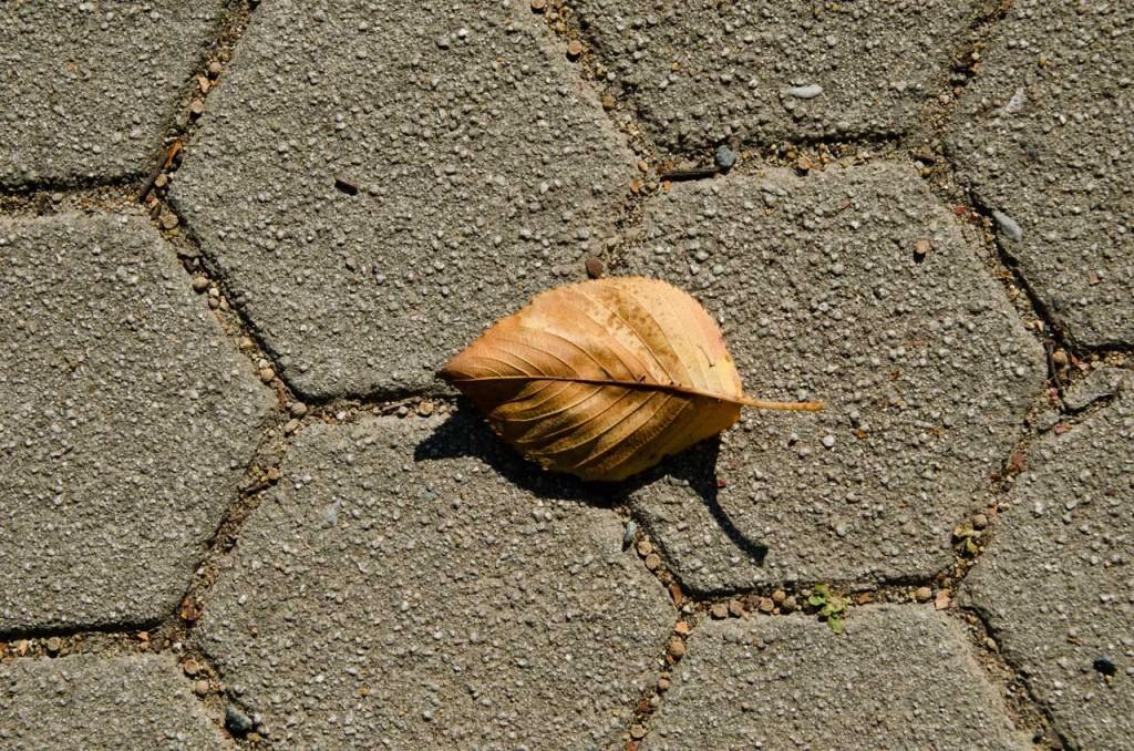 leaf-DSC_5837