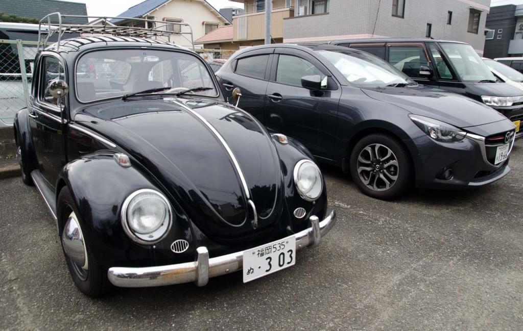 black-beetle-DSC_2047