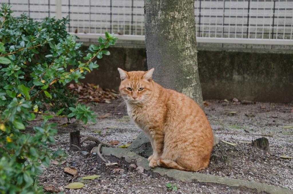 cat-DSC_1980
