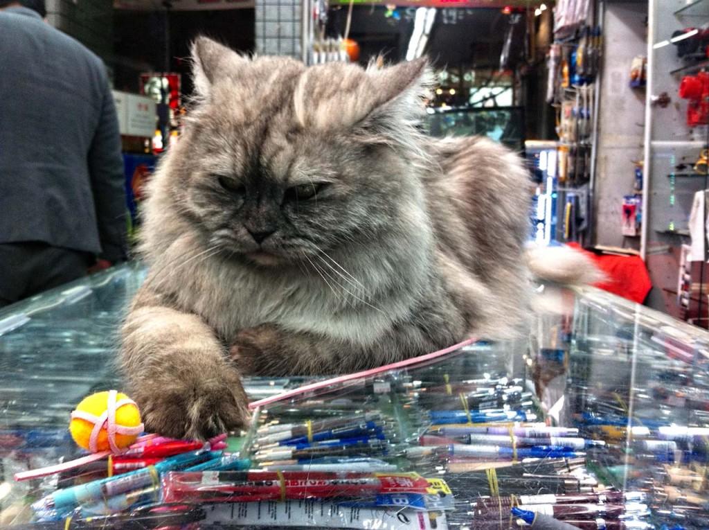 cat-IMG_1256