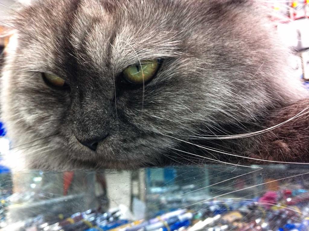 cat-IMG_1258