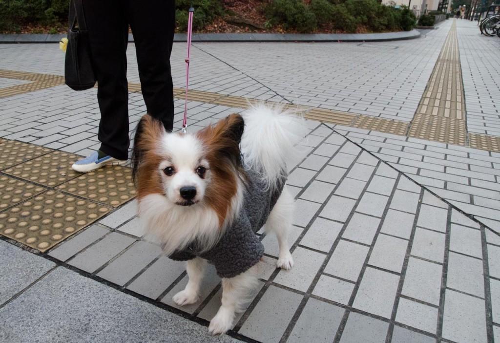 dog-DSC_1994