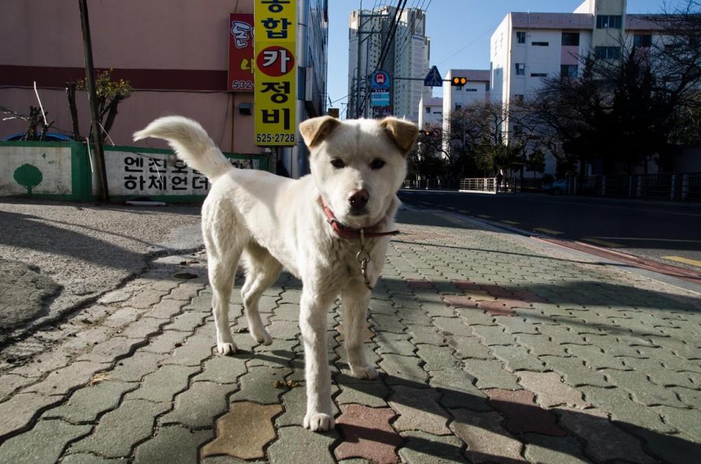 banyeo-dog-DSC_2445