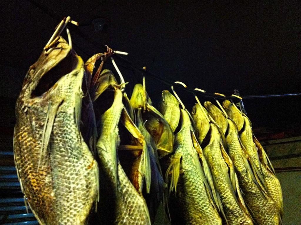fish-IMG_1319