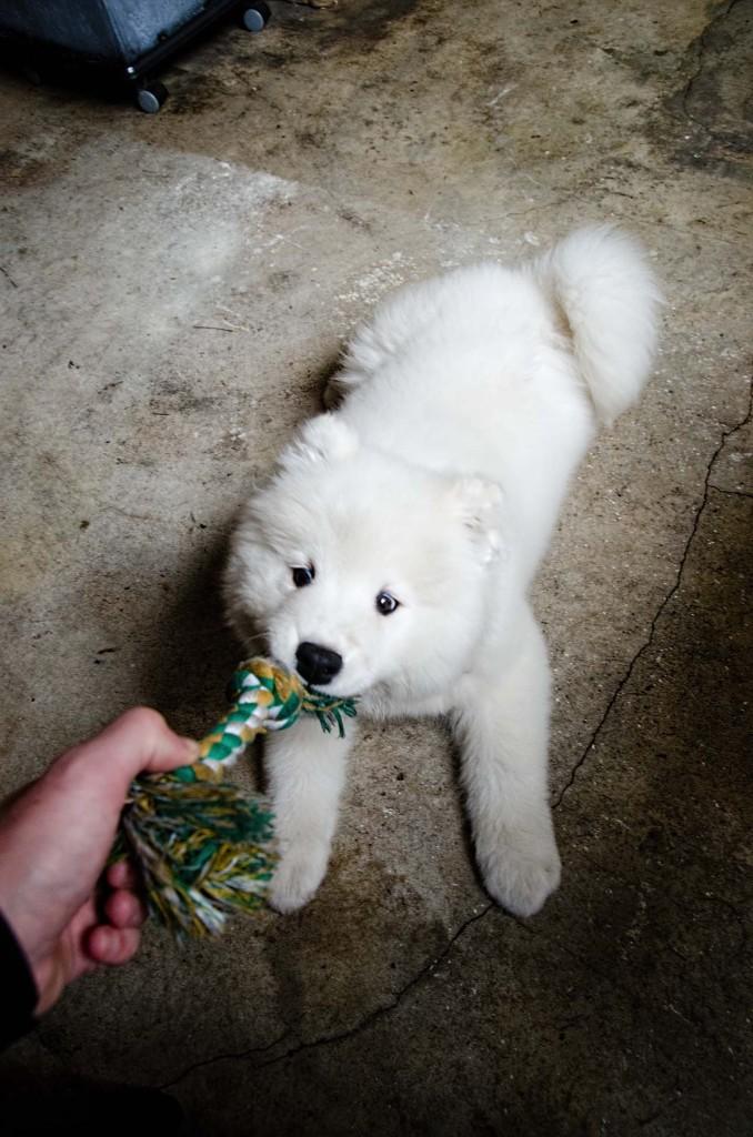 dog-DSC_3176