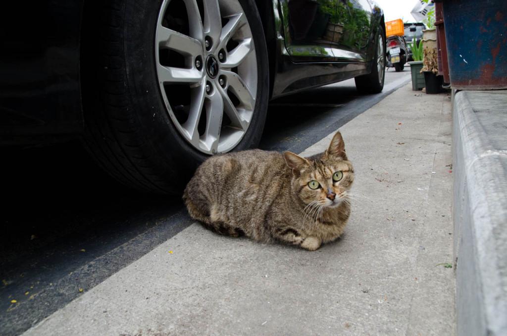cat-DSC_3656