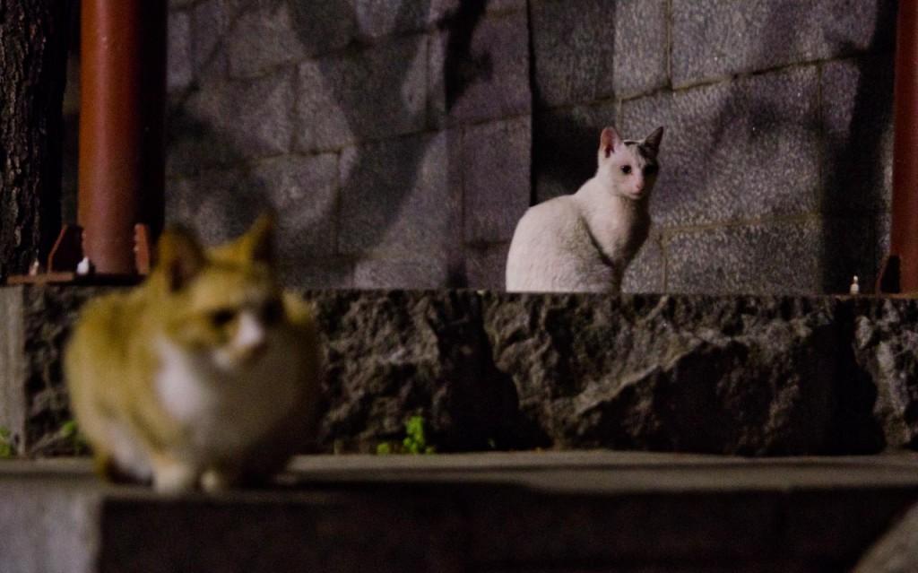 cat-DSC_4558