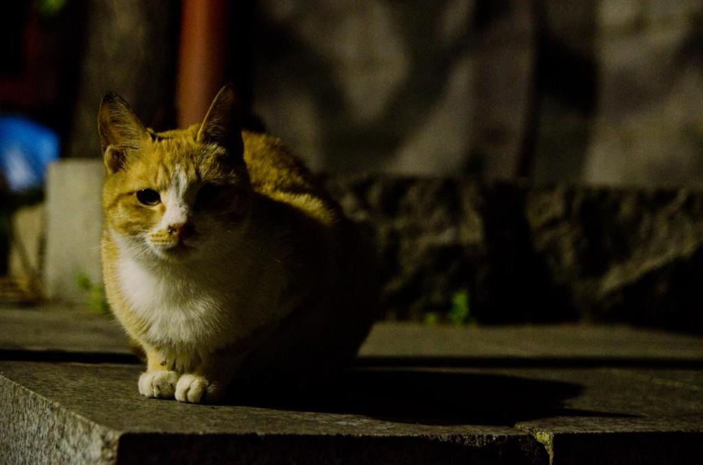 cat-DSC_4578
