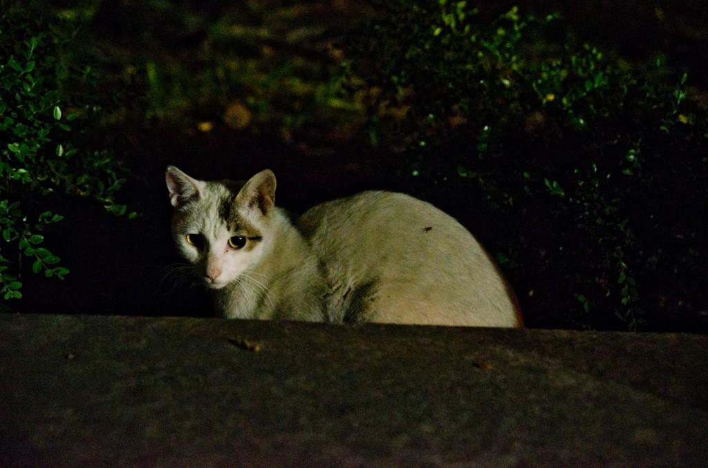 cat-DSC_4582