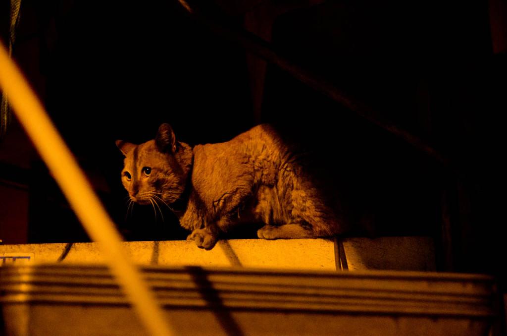 cat-DSC_5214