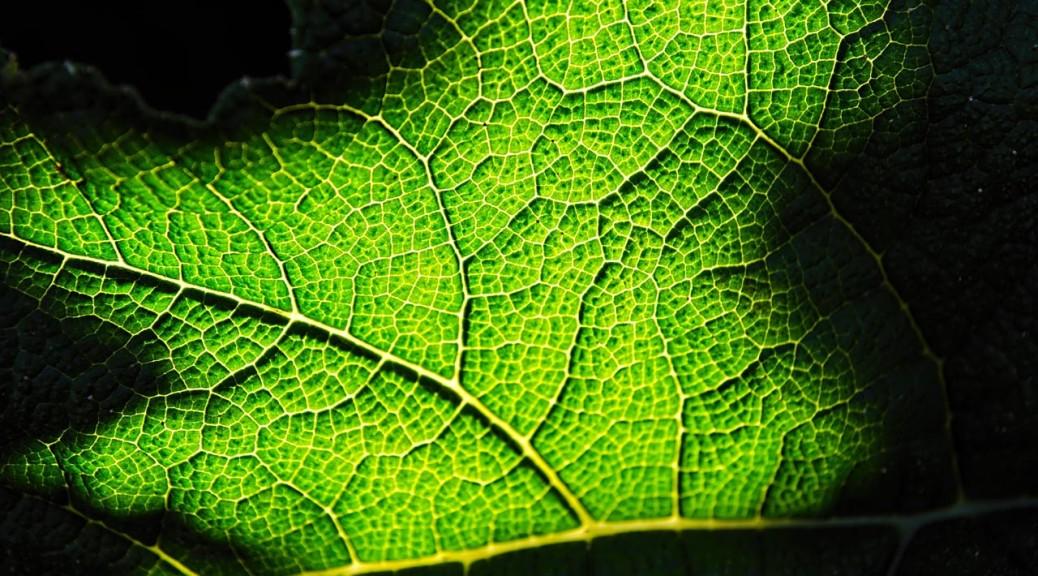 leaf-DSC_6049