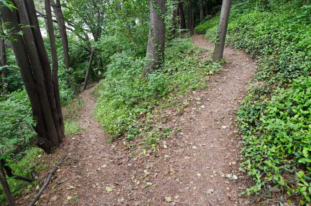paths-DSC_4666