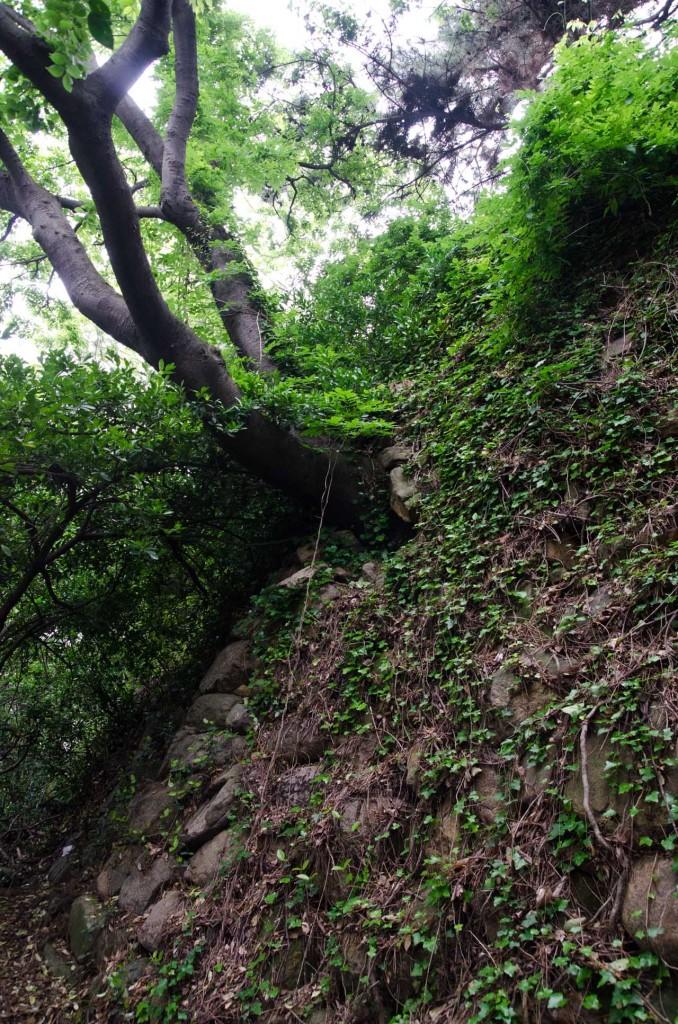 trees-wall-DSC_4680