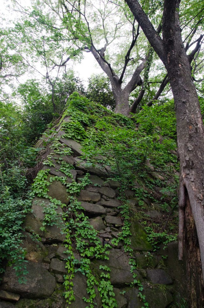 wall-DSC_4747