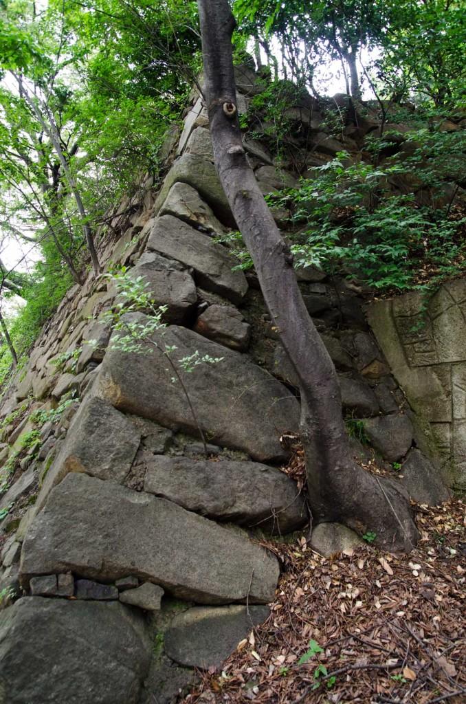 wall-DSC_4750