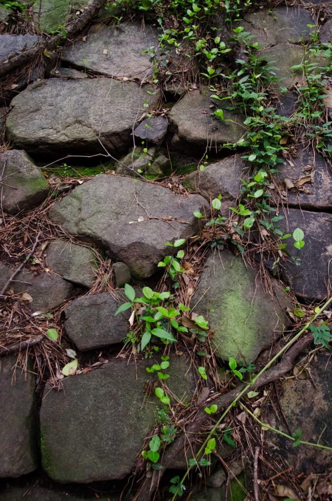 wall-plants-DSC_4676