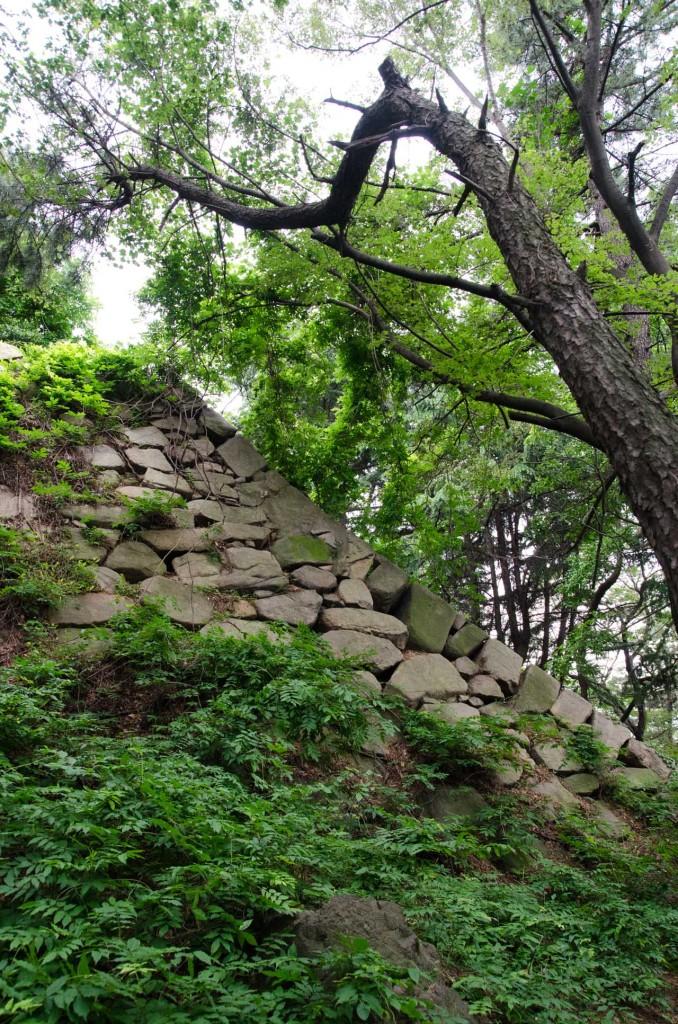 wall-tree-DSC_4704