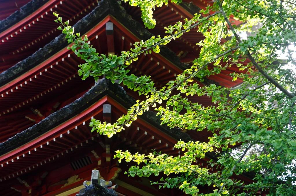 japanese-tea-garden-DSC_6027