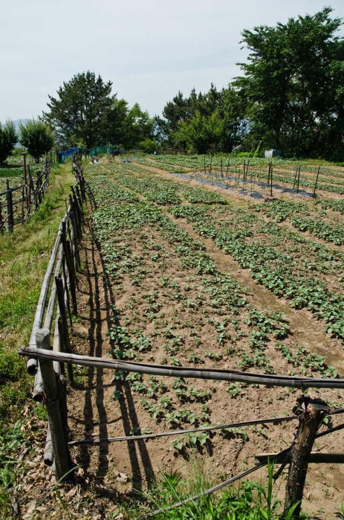 farm-DSC_5069