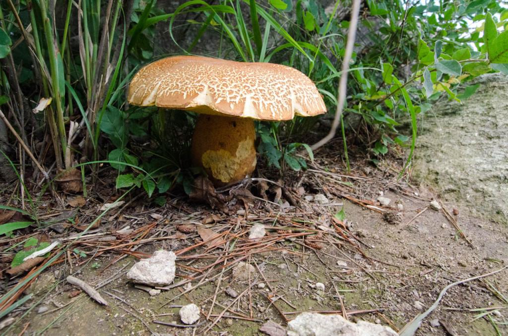 mushroom-DSC_7287