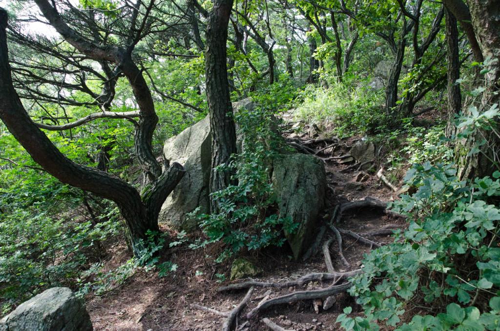 path-DSC_7294