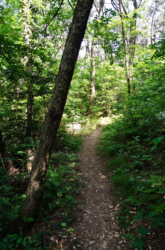 path-tree-DSC_5130