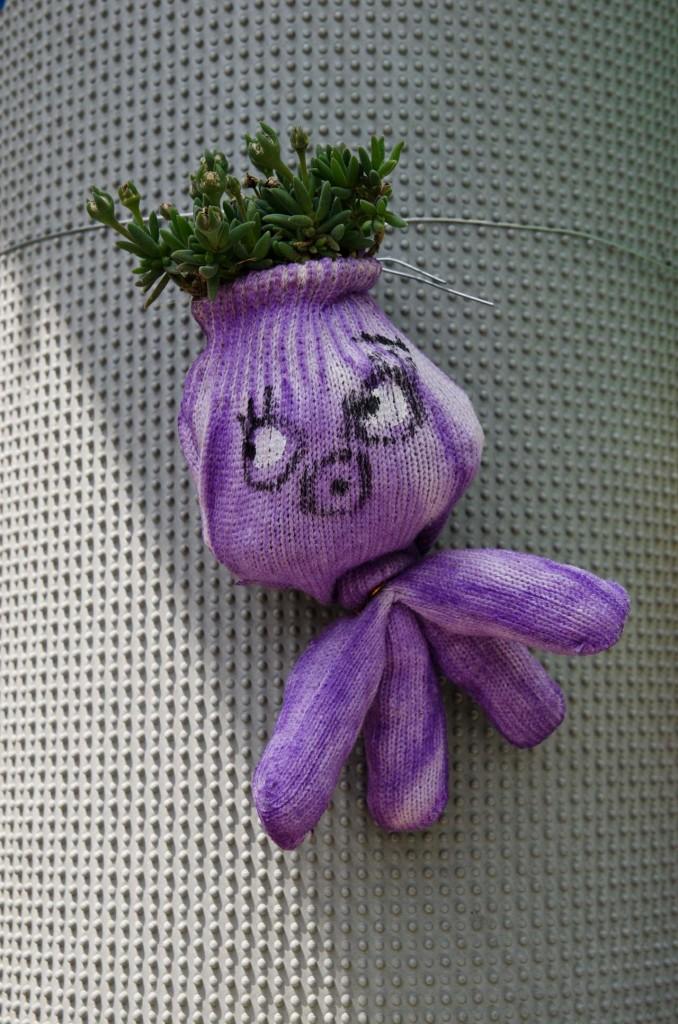 purple-DSC_5000