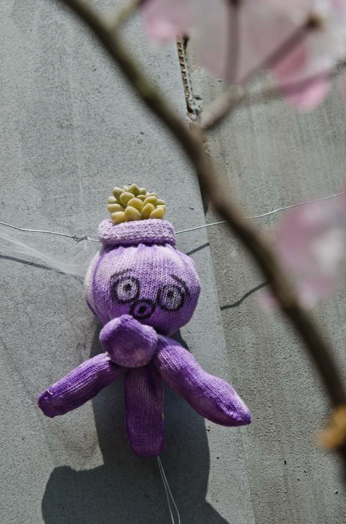 purple-DSC_5004