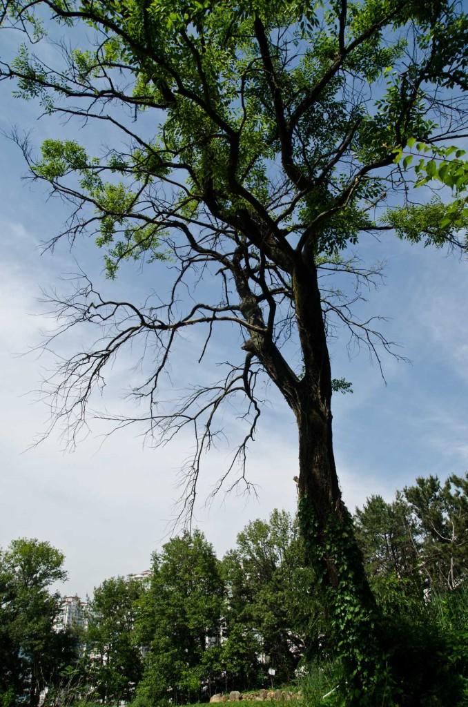 tree-DSC_5124